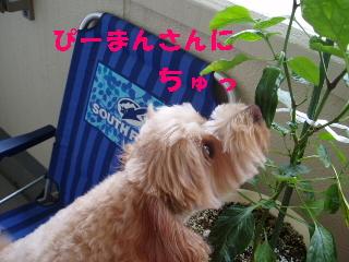 20060706215712.jpg
