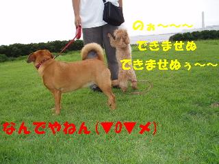 20060708215718.jpg