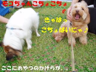20060709230944.jpg