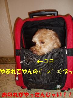 20060710221952.jpg