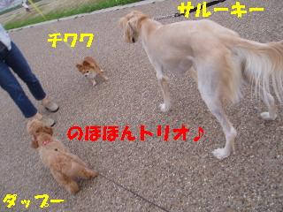 20060712203514.jpg