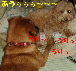 20060719201115.jpg