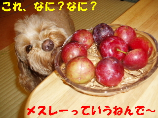 20060722220631.jpg