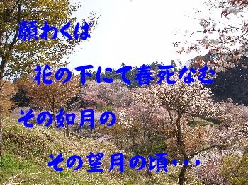 20070413224851.jpg
