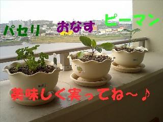 CA270116-a.jpg