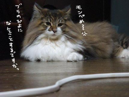 DSC03716.jpg