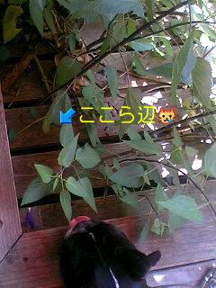 070531_1351~01001.jpg