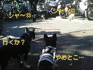 20051111061827.jpg