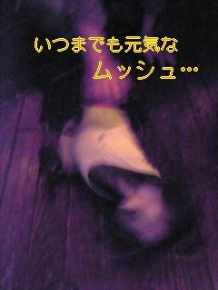 20051129080920.jpg