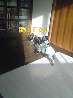 20060215094130.jpg