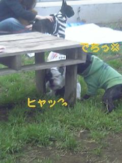 20060425080847.jpg