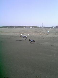 20060601061816.jpg