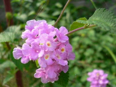 このお花の名前忘れたョ。