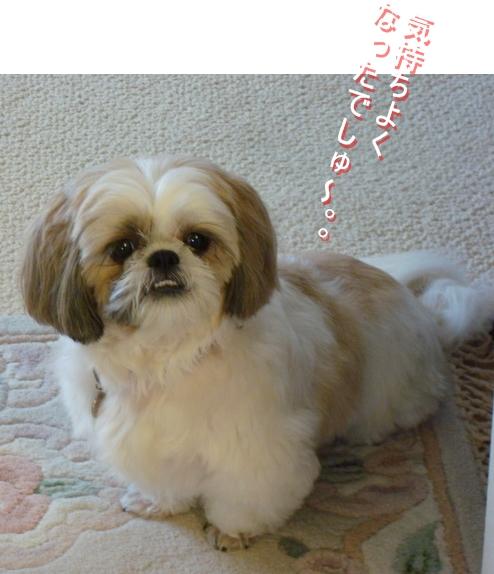 DSC04398moji.jpg