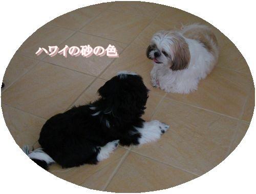 DSC04416wamoji.jpg