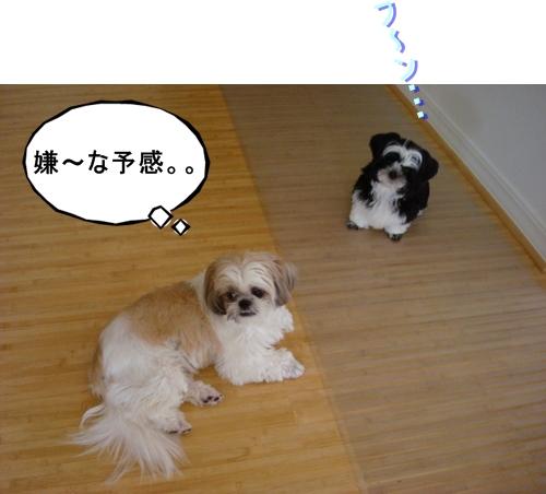DSC04647moji.jpg