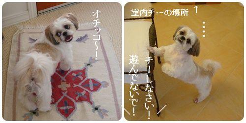 pageDSC03709x2moji.jpg