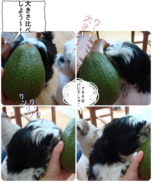 pageDSC04269x4moji.jpg
