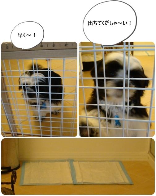 pageDSC04535x3moji.jpg
