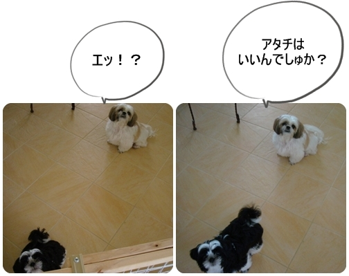 pageDSC04592x2moji.jpg