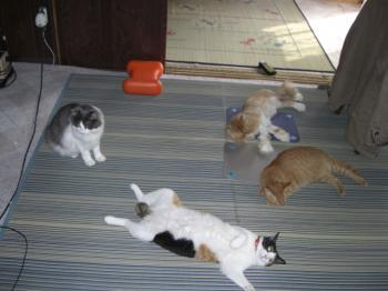 猫が落ちている風景~~