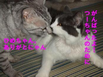 ココちゃんとひめちゃん