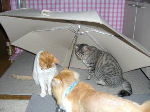 仲良し3猫組