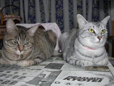 つーちゃんとココちゃん