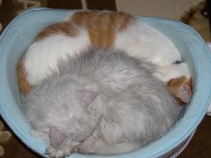 りりぃさんの、尻に顔をうずめて寝るつよし。