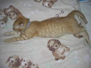 ムサシ君、寝る