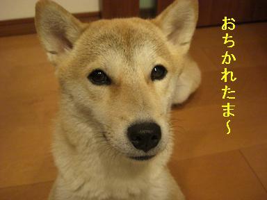おちかれ1014