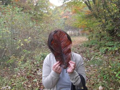 大きな葉っぱ