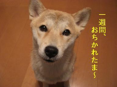 おちかれ1031