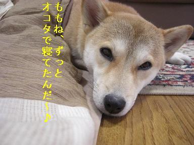 寝てたんだ