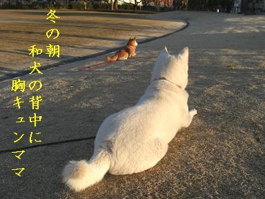 胸キユンママ
