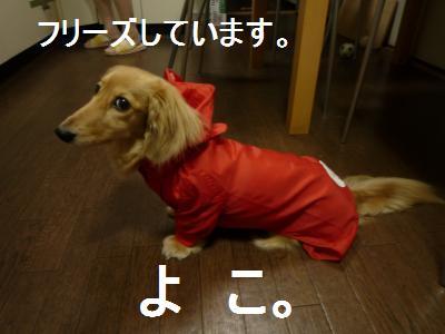 furiizuyoko.jpg