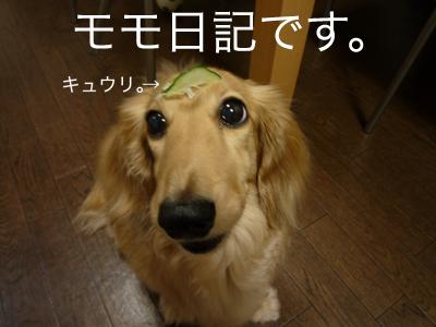 kyuuridaisuki.jpg