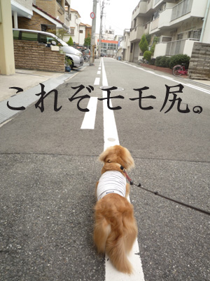 momojiri.jpg