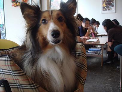 店内OKのカフェも嬉しいわん