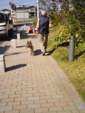 ジージと散歩