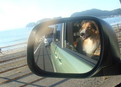 海沿いドライブ楽しいワン