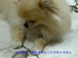 CIMG0590.jpg