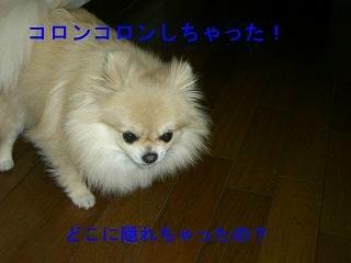 CIMG0711.jpg