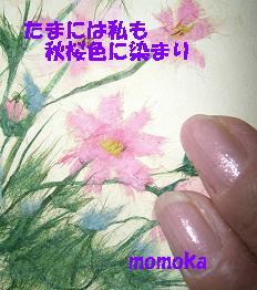 CIMG1641.jpg