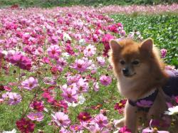 091018菜の花畑3