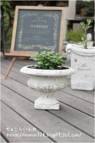 白い陶器鉢