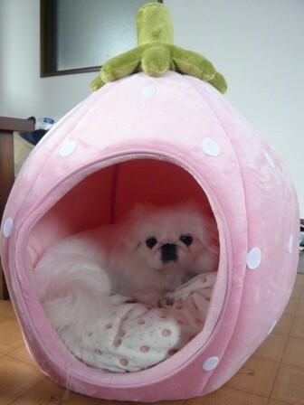 ichigo_house2.jpg