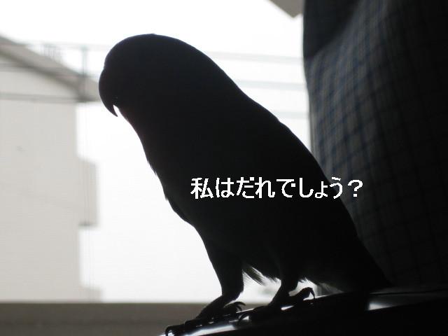 IMG_57011