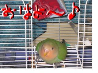 snap_momoume5_2009447315.jpg