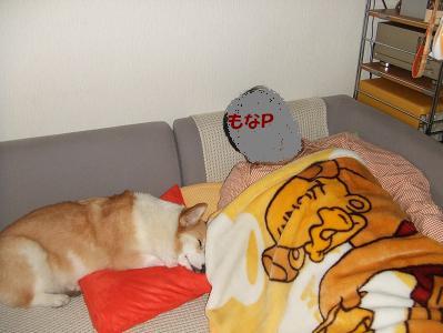 とうたんと添い寝